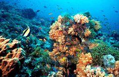 ¿Arrecifes de coral en peligro de extinción?