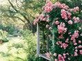 Look for an arbor with a built-in bench to replicate this look. Creeping Gloxinia comes in a variety of colors and will create a similar aesthetic when grown along the arbor.    Read More http://www.ivillage.com   iVillage