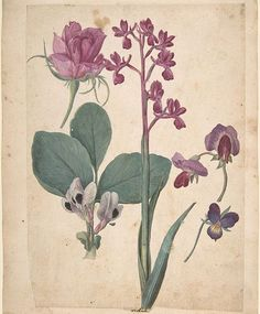 In 1564, Jacques Le Moyne de Morgue became the first European artist to visit the New World when he went on an expedition to Florida, and his journey saw the creation of several captivating botanical paintings of the local flora and fauna, which can now be seen at New York's Paul Kasmin Gallery. 🌿🍃  .   See more of the spellbinding paintings on anothermag.com now 🌸 ✍🏻 by @daisyaecw.