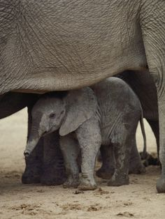 I love this baby elephant!