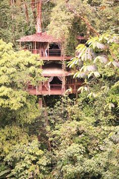Beautiful Herbal Remedies, Natural Remedies, Mother Earth News, Natural Building, Tree Houses, Photo Essay, In The Tree, Humble Abode, Diy Beauty