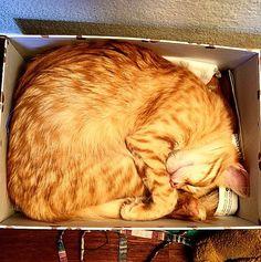 Greta una gattina in scatola