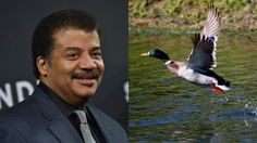 Twitter calls out Neil deGrasse Tyson for saying no animal feels pain during sex http://ift.tt/1RWQ1pu  Neil deGrasse Tyson seems to have forgotten about spiny cat penises.  The astrophysicist andKanye West of science Twitter caused a stir Friday with a tweet asserting that no current species feels pain during sex.  Unfortunately Tyson missed the mark. Fellow scientists chimed in almost immediately with examples of animals who  sorry animals  dont have a very pleasant fornication experience…