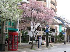 2014/4/11/ ベルデモール桜吹雪☆神戸:隠れ家的上海料理。