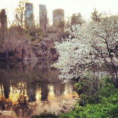 NYC Central Park, so incredibly pretty throughout all seasons. Romantic Destinations, Holiday Destinations, New York Central, Central Park, Places To Travel, Places To Go, Empire State Of Mind, Blossom Trees, Jet Plane
