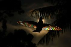 A Rainbow of Light Diffracts Through Hummingbird Wings in Photographs by Christian Spencer - Garden Care Beautiful Birds, Animals Beautiful, Hummingbird Wings, Hummingbird Pictures, Eclipse Photos, Magical Pictures, Nature Pictures, Dog Shots, Rio De Janeiro