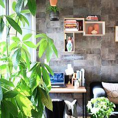 Ana ▪️ (@homedesignbyana) • Instagram-Fotos und -Videos Sunny Sunday, Videos, Plants, Instagram, Plant, Planets