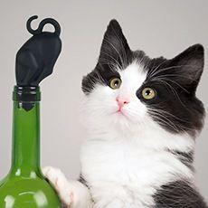 Stop kitty