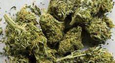 How to Make Cannabis Shortening  http://www.thecannabischef.com/content/how-make-cannabis-shortening/