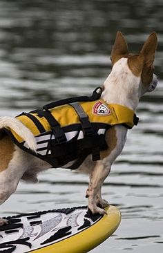 Ensure your dog's safety around water with our Dog Flotation Device. This lifejacket by EzyDog is designed and extensively tested to provide the utmost comfort and protection.