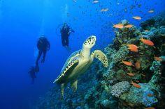 Go scuba-diving and snorkeling at Cozumel. blisshoneymoons.com