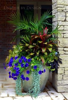 awesome Container Gardening Ohh the electric blue is eye popping lovely...