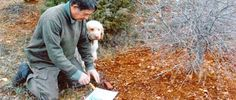 Jean Pierre Ducret spécialiste de la truffe, trufficulteur à Ampus en Dracénie.