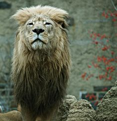 http://www.smashingmagazine.com/2009/02/15/35-beautiful-examples-of-animals-photography/#