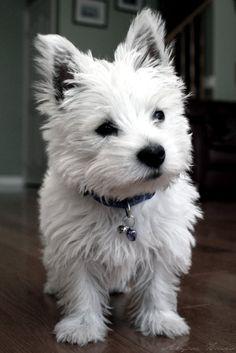 Wiwwie Dog :)