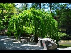 """Images of Vandusen Gardens in Vancouver, B. Music: an adaptation of """"The Shepherds Song"""" from the movement of Beethoven's Symphony arranged and per. The Shepherd, Cottage Gardens, 21st Century, Beautiful, 3rd Millennium"""