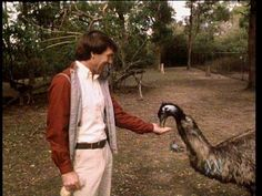 Join Don Spencer as he describes the emu, one of the biggest birds in the world. Watch emus searching for food and...