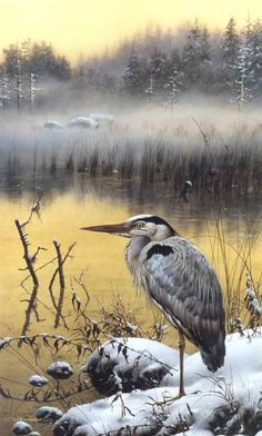 We see a lot of blue herons in the swamps, but it never gets old.