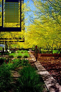 Arizona State University Polytechnic Campus U2014 New Academic Complex Mesa, AZ  Ten Eyck Landscape Architects