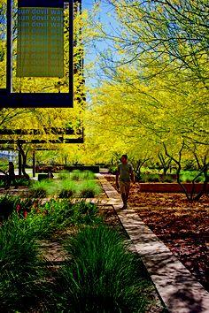 Arizona State University Polytechnic Campus — New Academic Complex Mesa, AZ Ten Eyck Landscape Architects, Inc., Phoenix Client: Arizona State University