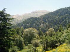 Horsh Ehden Nature Reserve, Lebanon