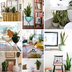 2013: The Year of the Snake (Plant) | The Sill - New York Houseplant Delivery & Plant Design Services