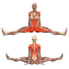 ૐ YOGA ૐ Upavishtha Konasana ૐ Postura Sentada. Elongación de Abductores y parte Posterior. Seated pose, legs wide apart, back straight - - Yoga Poses | YOGA.com