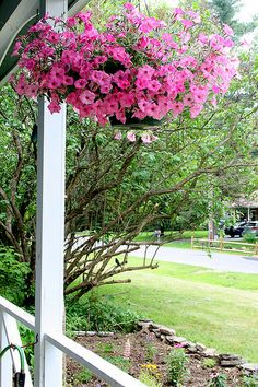 Flowering Pink