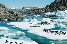 Summer day in Antarctica. Trips here start at around 10G so unless you own an icebreaker-better start saving.
