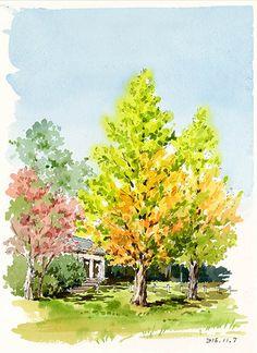 毛利邸のメタセコイア Atsuko Inoue Water Color
