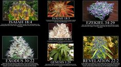 The Stoners Bible. #Marijuana #Weed #Cannabis #MaryJane
