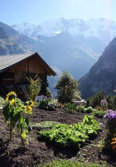 Switzerland Travel Inspiration - Gimmelwald, Berner Oberland