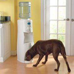 As a pet owner and a pet lover, I think that this is such a cool product! You never have to worry about filling up the dog's water bowl again, because they drink the same, filtered, refreshing water that you do.