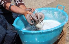 love for raw octopus....ovvero tutta la poesia in una domenica barese