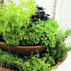 Plant a pretty and space-saving two-tier herb garden to keep by the back door. Fill two containers—one 8 inches wider than the other—with soil. Place the smaller pot on top of the larger one, and add herbs.