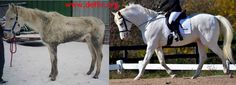 Days end farm horse rescue Before and after Horse Feed, Horse Rescue, Animal Rescue, Life Is Precious, All About Horses, Faith In Humanity Restored, The Fox And The Hound, Horse Farms, Beautiful Horses