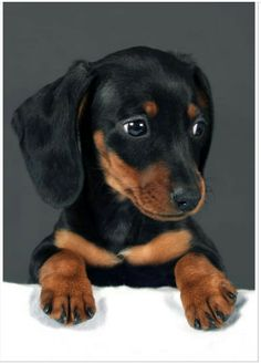 Hilda had a dachshund named Hansie.