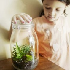 Beautiful glass jar terrariums for tables and auction items...