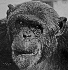 The Monkey - null