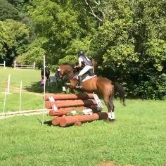 Horses Jumping Videos, Dressage Videos, Funny Horse Videos, Funny Horse Memes, Funny Horses, Dressage Horses, Cute Horses, Horse Love, Show Horses