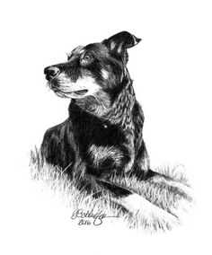 Pet Portraits done from your photos. Lifelike & highly detailed. Commission a piece at http://www.gensart.net or https://www.etsy.com/shop/gensart