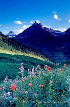 Wildflowers beneath Logan Pass, Glacier National Park, Montana, USA. Stock Photo