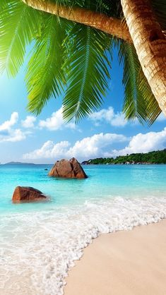 Get inspired to decorate your home with Backyard Palm Trees, many types which you may choose from. Transform your home feel like to be a tropical resort. Strand Wallpaper, Beach Wallpaper, Amazing Wallpaper, Nature Wallpaper, Chic Wallpaper, Tropical Beaches, Florida Beaches, Beach Scenes, Ocean Beach