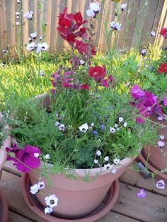 Wildflower plant pots