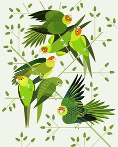 Scott Partridge - illustration - carolina parakeets