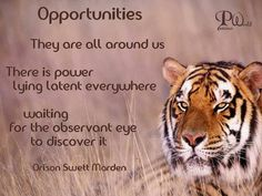 Opportunities. They are all around us.  There is power lying latent everywhere  waiting for the observant eye to discover it. ~ Orison Swett Marden ~  #BengalTiger