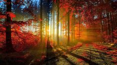 To get the best picture of autumn forest, you should understanding the moment of this short season. Description from allpicts.in. I searched for this on bing.com/images