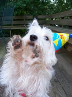 Raise your paws if it's your birthday.