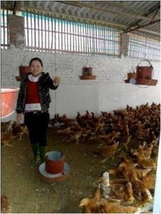 A microcredit client of Vietnam who used her loan to expand her chicken raising business.