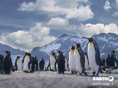 Antartide!